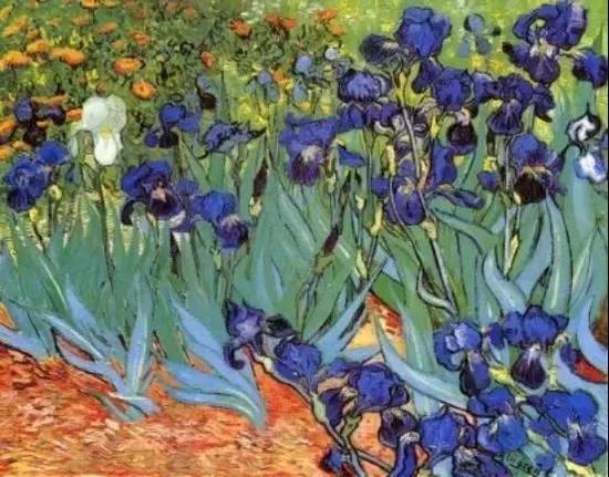 荷兰画家文森特·梵高《鸢尾花》(Irises)