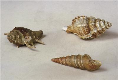 图3,清乾隆官窑瓷海螺,长10.5(大)、9.4(中)、8(小)厘米,故宫博物院收藏