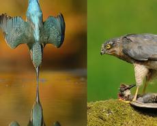 为一只鸟坚持6年720000次快门