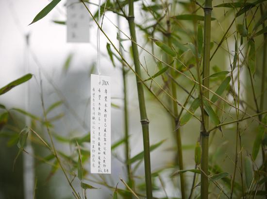 """展览现场,《愿望树》 (""""小野洋子: 金梯子"""",林冠艺术基金会,北京 2015 摄影:雷坛坛 ©2015 小野洋子 ©林冠艺术基金会)"""