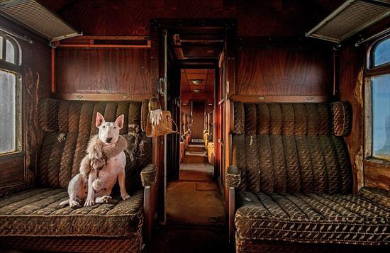 最受读者喜爱奖:摄影师Alice van Kempen在比利时一辆废弃的火车上完成该作品。图中的狗狗是Alice的斗牛犬克莱尔。该图片是她用3张不同曝光度的照片组合完成。