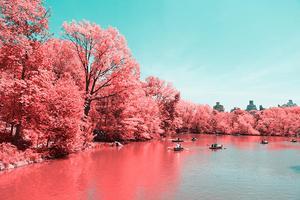 纽约中央公园:红外线镜头下的巧妙转换