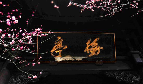 國清寺隋梅是我國現存最古老的梅樹之一