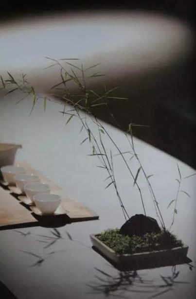 人在草木间是为茶 身在绿翠碧野中倘佯-借茶之清净元和让自己快乐的忙