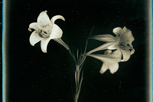 Takashi Aris, Easter Lilies, 119mmx165mm © Takashi Aris, Courtesy of Timeless Gallery