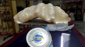 世界上最大珍珠:重34公斤价值1亿美元
