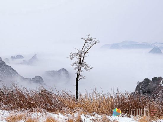 刘鲁豫  中国摄影家协会理事、河南省摄影家协会主席<br /> 《生命礼赞》