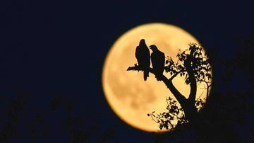 老外摄影师顽皮 把月亮玩成这样
