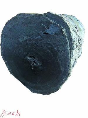 该乌木经初步认定,年约4000年。