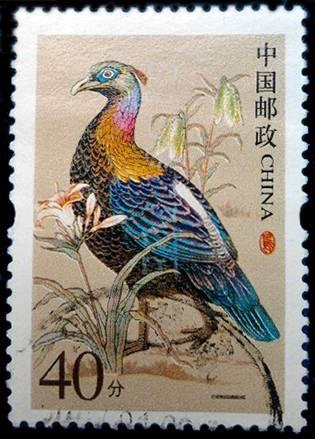 璀璨夺目的珍稀品种  --绿尾红雉