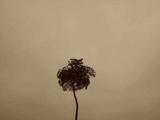 雷本本《泛黄的记忆》,21x29cm,2012年