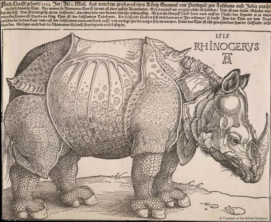 丢勒的木版画作品《犀牛》