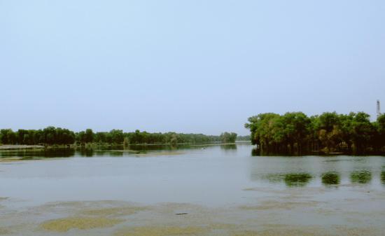 (宋志峰 摄影)林中水道-在远离海洋,四周高山环绕的中亚内陆深处,降水稀少,蒸发强烈,水成了最珍贵的资源。有水滋润的地带,就有生命喧闹的绿洲发育。