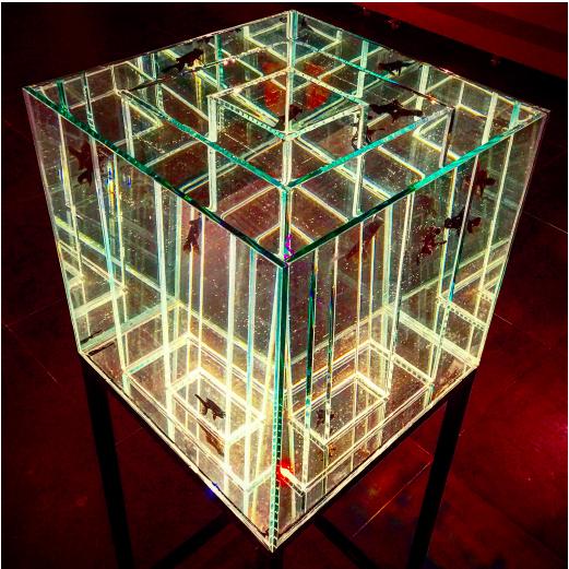 吴博《十四天的生命》玻璃、黑龙精金鱼、水,55cmx55cmx145cm,2016