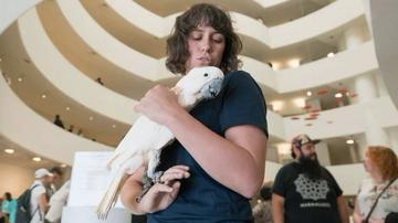 为什么古根海姆博物馆住着鹦鹉?