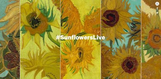 一次看够凡高5幅《向日葵》,全球5家博物馆直播