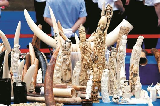 楚天都会报讯 图为:当前在市场上买卖象牙及成品均长短法的(材料图片)