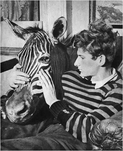 弗洛伊德和斑马头
