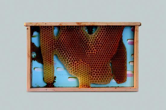 所有的灰都是花粉(诺瓦利斯),20x30厘米,2016