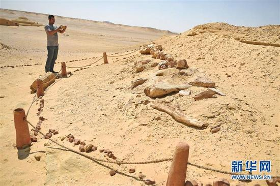 """9月27日,在埃及法尤姆省的""""鲸鱼谷"""",游客参观古鲸类化石。"""