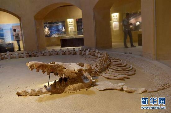 """这是9月27日在埃及法尤姆省""""鲸鱼谷""""拍摄的古鲸类化石。"""