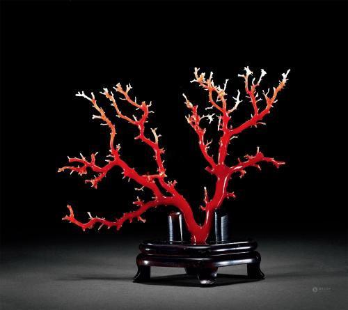 歌阑赏尽红珊瑚