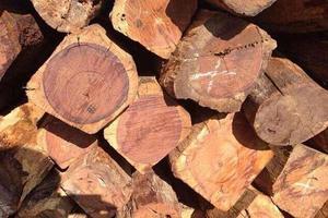 缅甸停止木材出口 红木市场缅甸花梨称王已成定局