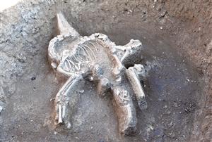 祭祀坑中的羊骨架