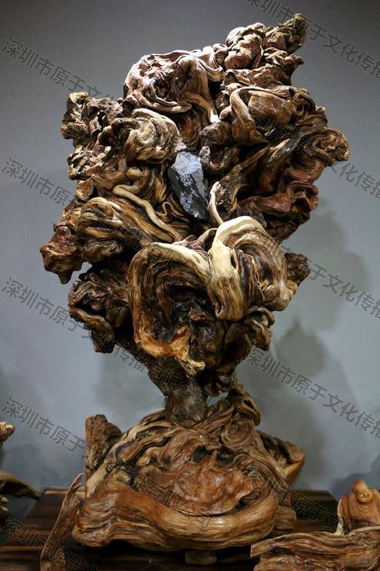 珍木收藏中的活化石