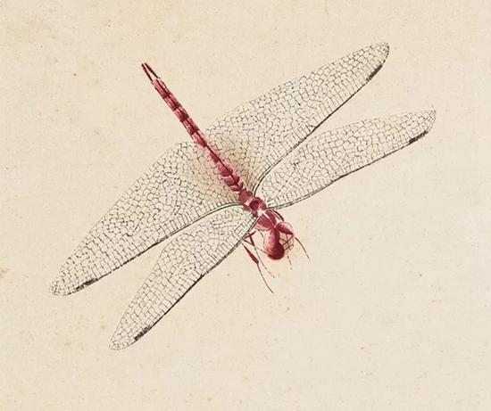 蜻蜓 局部
