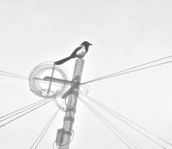 伊瑞 《电线杆#3》 186x215cm 宣纸水墨 2016年