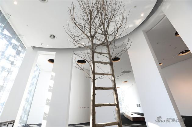 天梯1,沈烈毅,木,2019