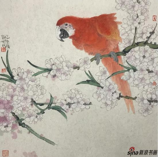 鹦鹉 设色纸本 50×50cm