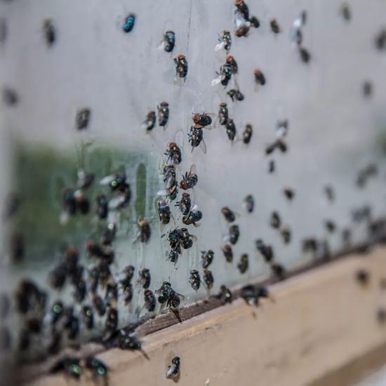 Nobody Cares 没有人在乎,展览现场细节。苍蝇是真的。艺术家在展览开始之前在窗边放上鱼肉,鱼肉生出蛆,之后变成蝇。