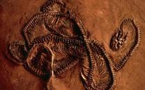 2.5亿年前生物灭绝的秘密