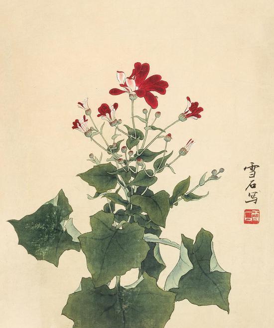 白雪石 瓜叶菊 34×28 cm