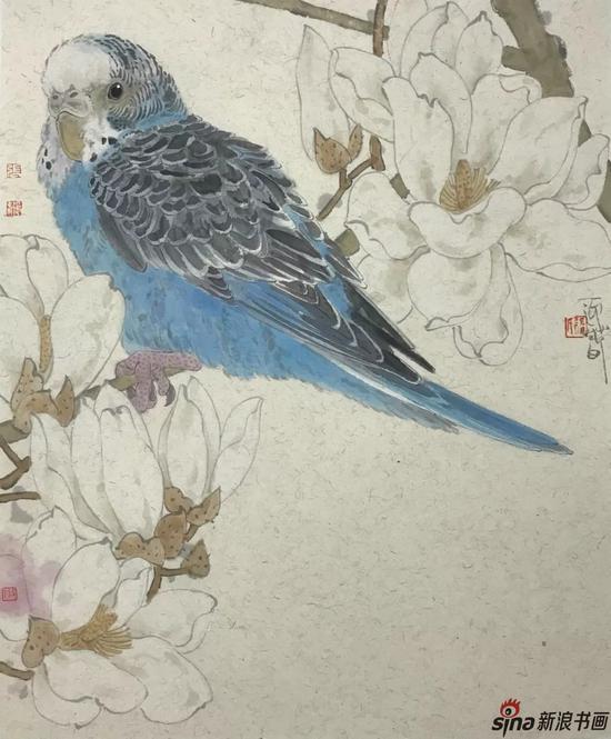 玉兰鹦鹉 设色纸本 50×50cm