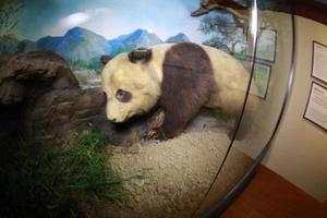 看140多年前的上海博物院旧藏