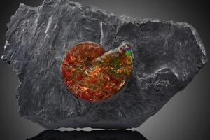 珍稀史前動植物化石拍賣?總估價178萬元