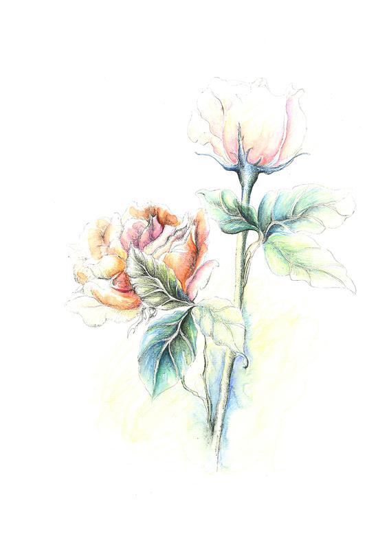凤凰手绘图水彩