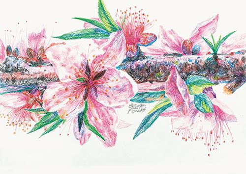 彩铅手绘海报素材