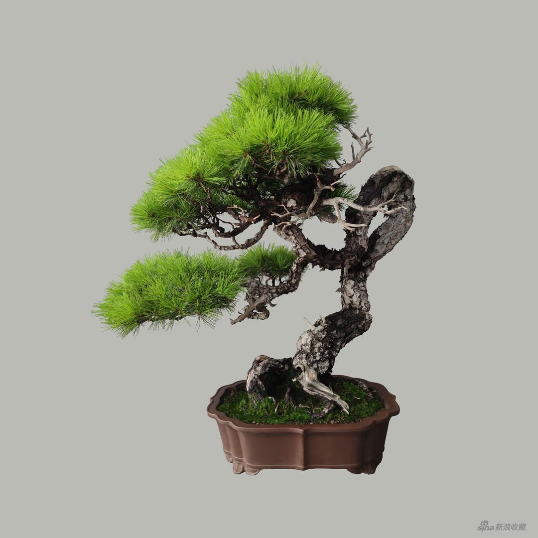 《赤松》,特别项目《匠作》之《匠心之致-日本传统工艺展》,来自小林国雄