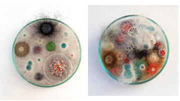 她把真菌培养成了艺术品