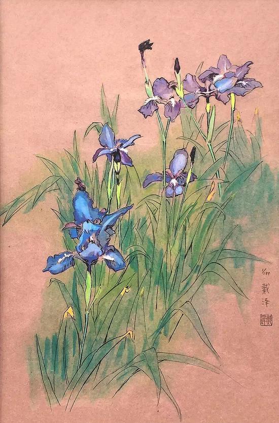 《鸢尾花》|