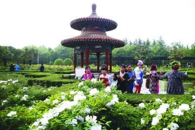 游客在洛阳牡丹文化节期间赏花