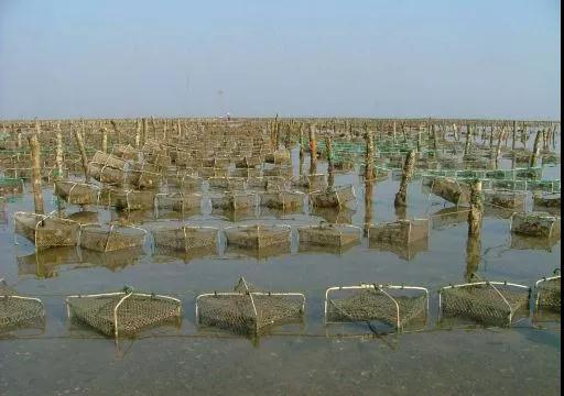 合浦珍珠养殖基地