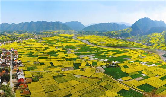 汉中最美油菜花海(汉中市文化和旅游局供图)