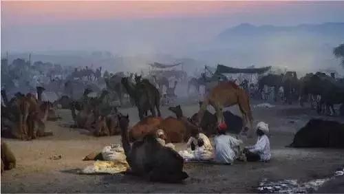 戈尔康达拥有10,000只骆驼和牛的大型商队