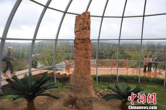 长子县已对仙翁山木化石自然保护区100多处裸露木化石实施了透明体保护。长子县木化石管理中心供图
