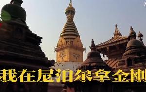 雷哥出品:到尼泊尔寻找最美金刚菩提